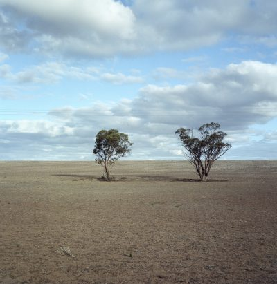2 trees, Mallee Highway