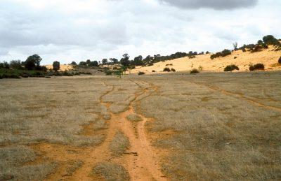 J. Coppi,  grazing land, Cooke Plains, SA, 1991