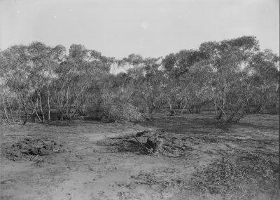 Mallee scrub, circa 1945-54