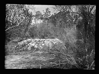 A.J. Campbell,  Mallee fowl mound, 1899